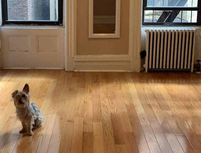 Dog in a new home